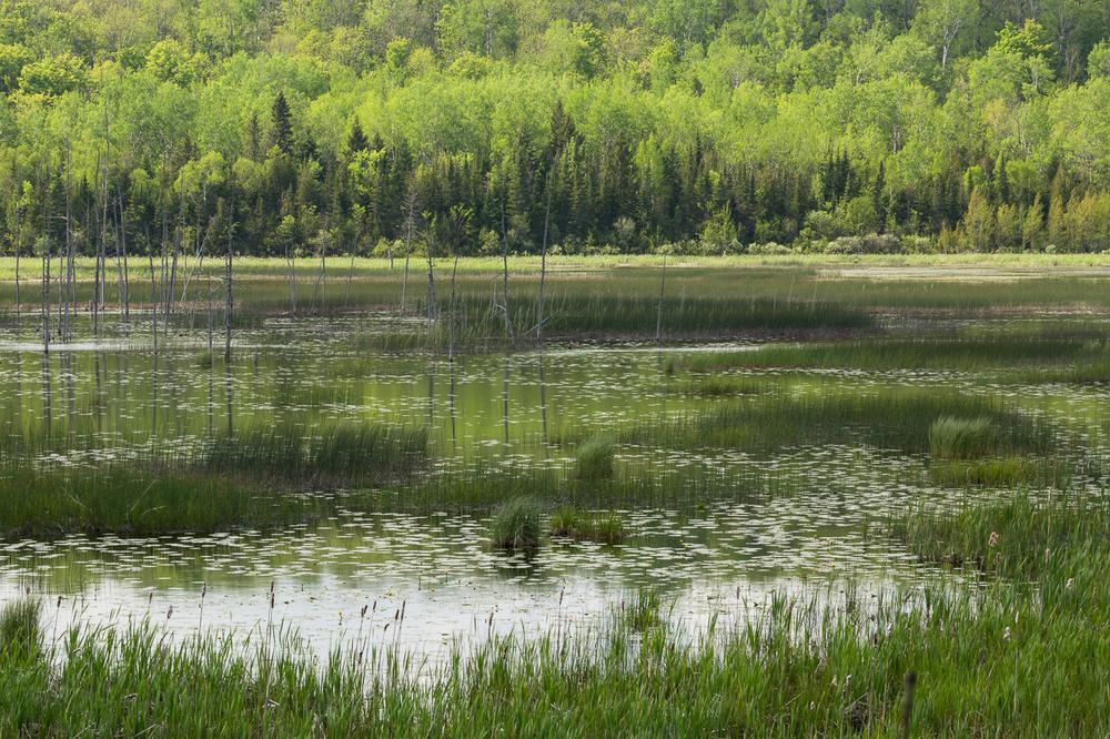 Bognor Marsh