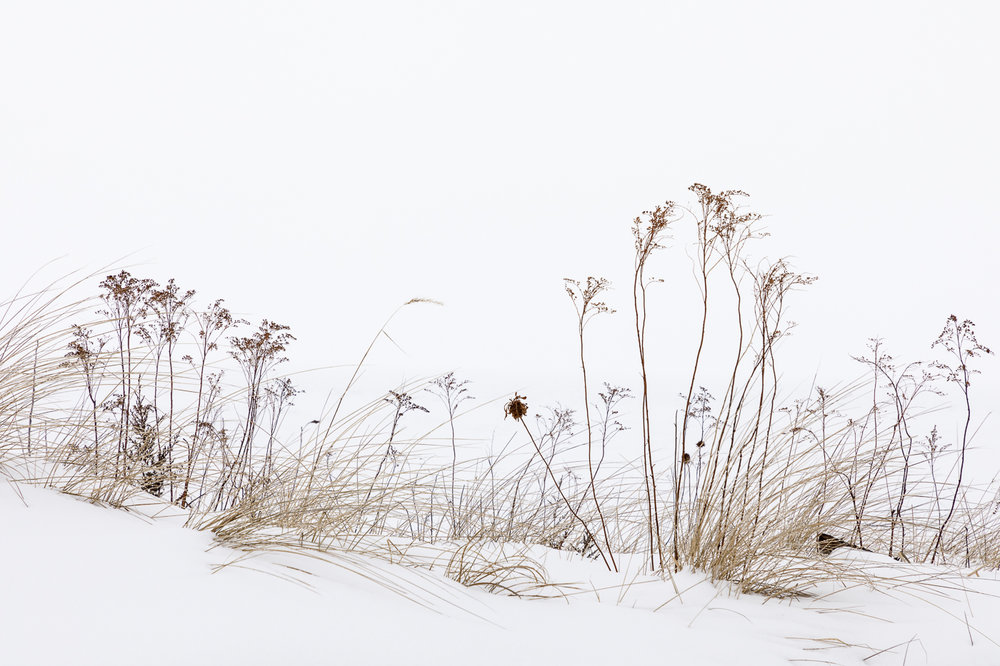 Grasses in Snow along the Dunes