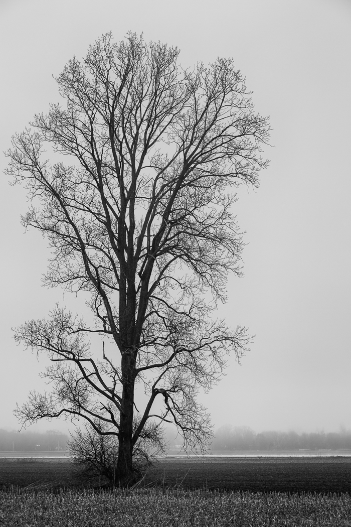 Tree on a Foggy Morning