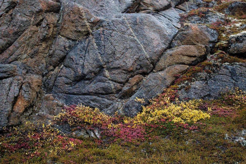 Arctic Rocks and Tundra Flora