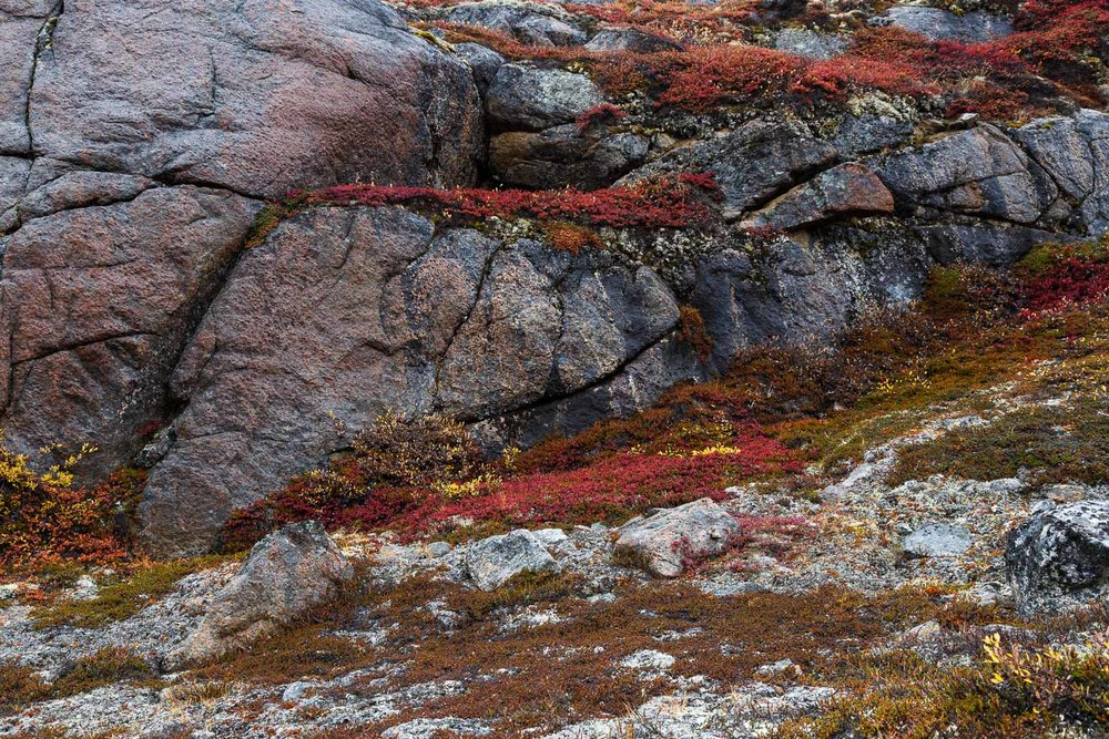 Ancient Stone and Arctic Flora