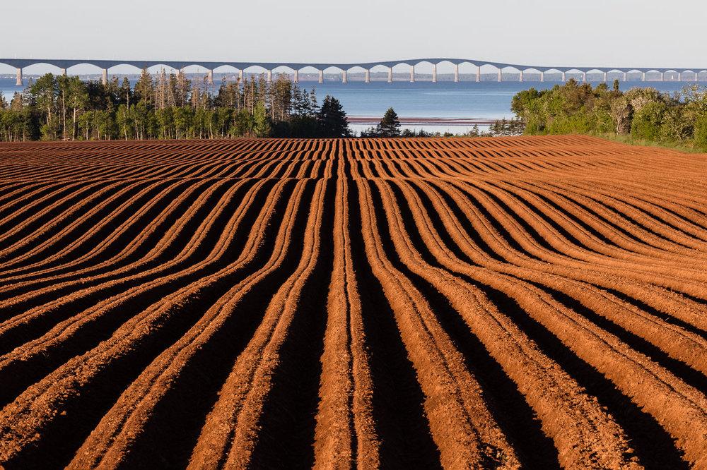 Potato Field and Confederation Bridge in PEI