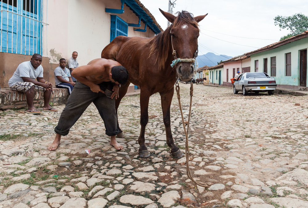 Shoeing the Horse