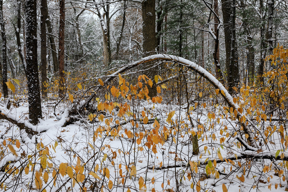Late Fall and Early Snow in the Forest