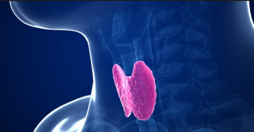 cedrapharmacy_thyroids_blog.jpg