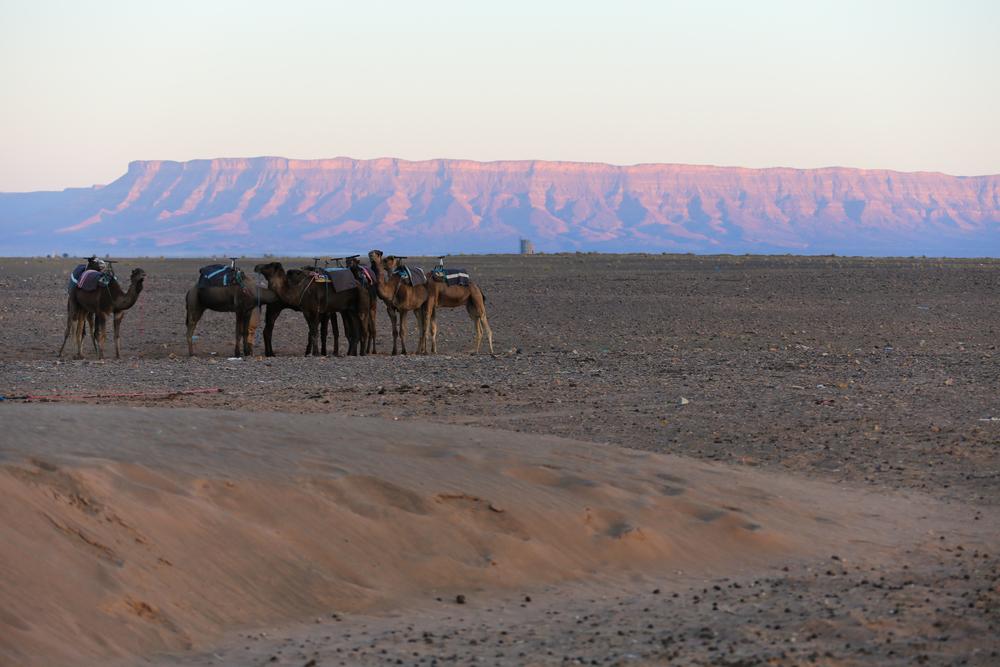JeanetteSha_Morocco-27.jpg