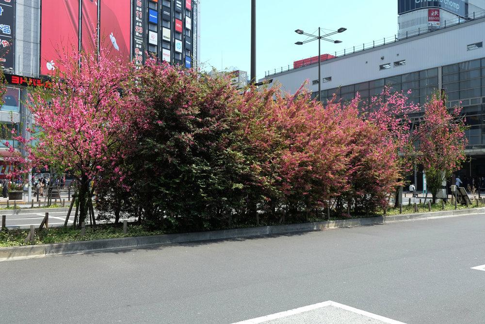 Akihabara Flora, 2017