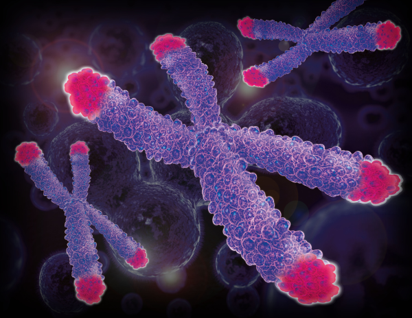 Illustration of human chromosome with telomeres shown in red.