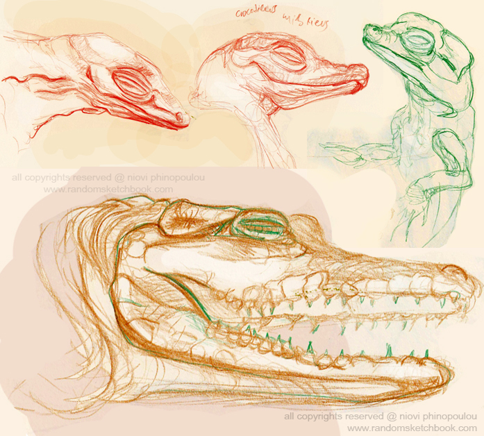 Natural History Museum crodocodile observation sketches