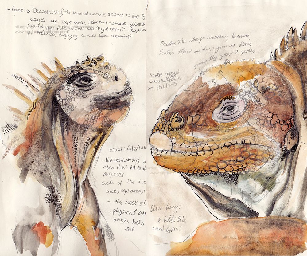 Marine iguana studies