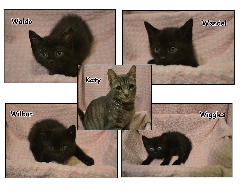 Katy, Waldo and Wilbur — Patricia H  Ladew Foundation, Inc