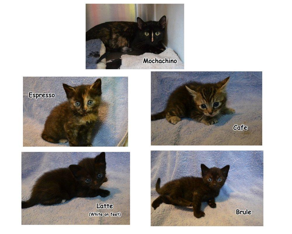 Mochachino and Kittens.jpg