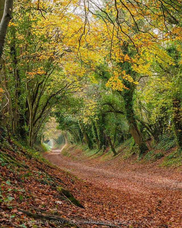 Revisited one of my favourite places in Sussex last week in its autumnal glory. . . . . #photography #nature #landscape #landscapephotography #southdowns #sussex #ig_sussex #ukpotd #uk_shots #naturephotography #autumn #halnaker #photooftheday #instagood #trees #agameoftones #westsussex #autumnvibes #travel #explore_britain #countryside #ukscenery #naturelovers #tree_brilliance #earthcapture #tree_magic #earthpix #justgoshoot