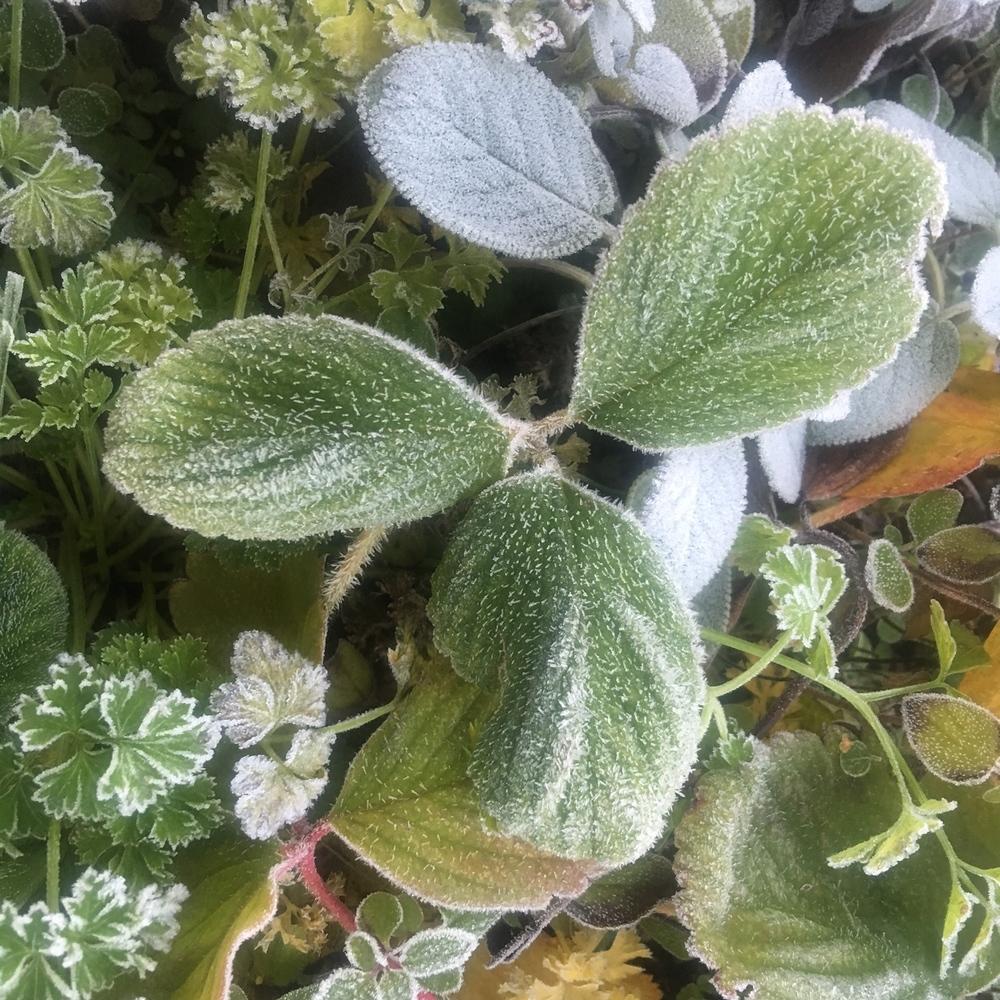 Herb Planter