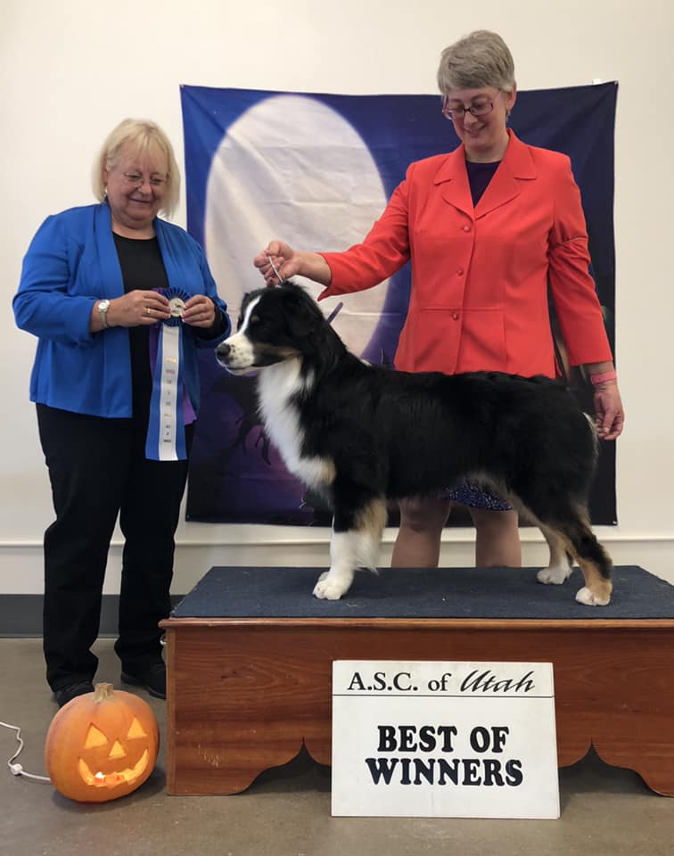 WD, BOW - October 20, 2018 under Sr. Breeder Judge Wendy Finsterwald for a 5 point major!