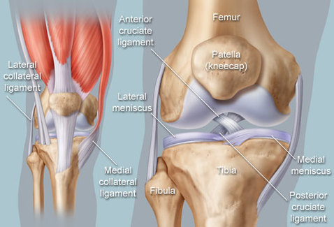 Knee Pain How To Train Smart Wellness By Little