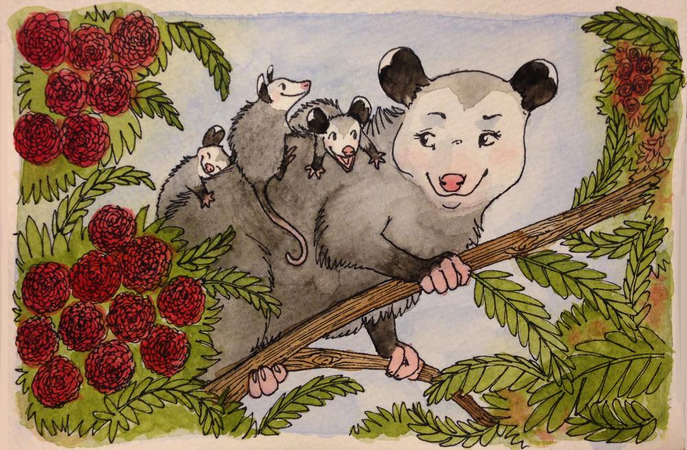 """""""Possum Mama"""" - Ink, watercolor"""