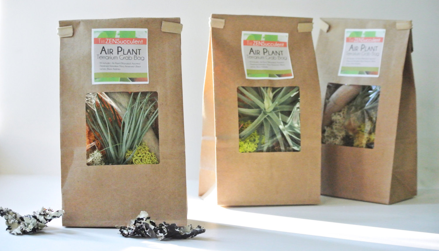 Air Plant Terrarium Air Plant Terrarium Grab Bag Air Plant Tillandsia Living Home