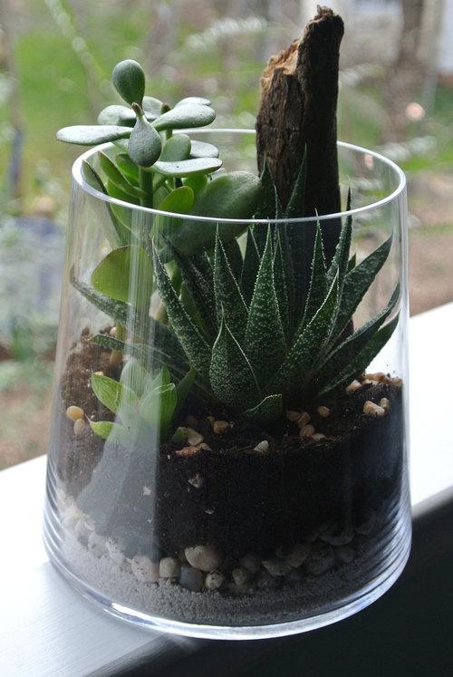 Jaded Greens Terrarium The Zen Succulent Durham S Neighborhood