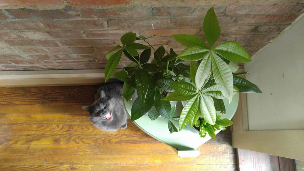Plants And Pets Know What S Safe And What To Avoid The Zen