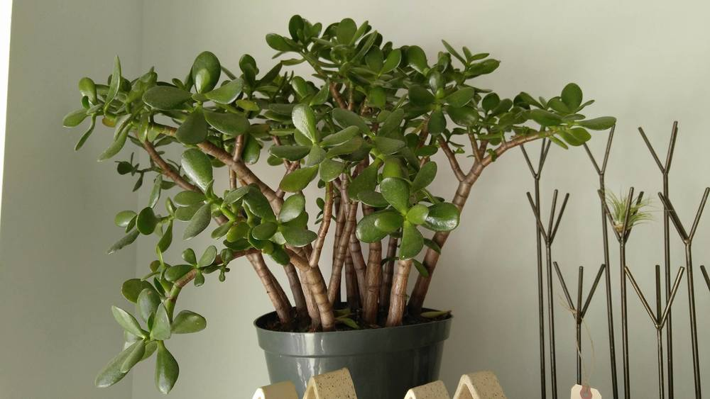 Plants in the office - Blog - P.I.C. Maintenance -