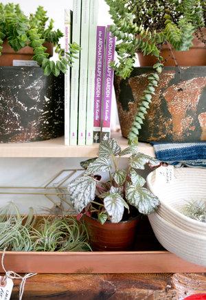 The Zen Succulent Durham S Neighborhood Plant Gift Shopthe Zen