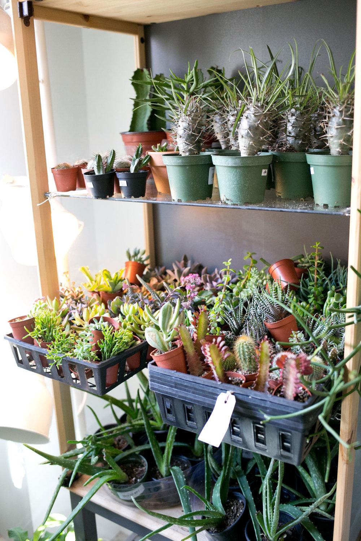 Succulent-Shelf-Zen-Succulent.jpg