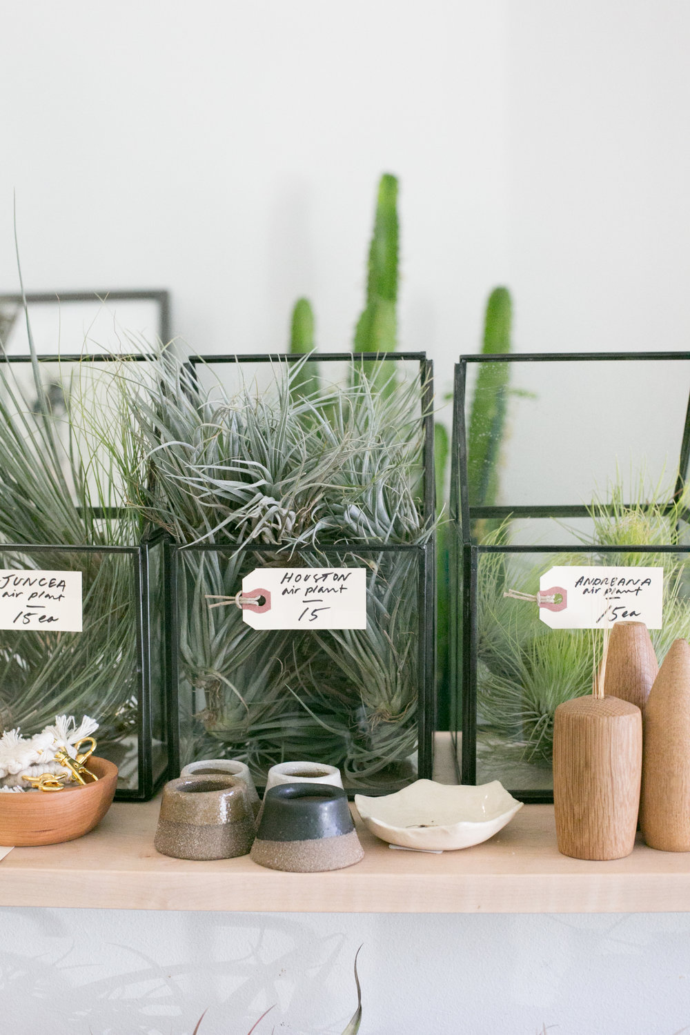 Check out our air plant selection in store or   online  . If you buy online, we have in store pick up and local delivery (sorry, Durham only).