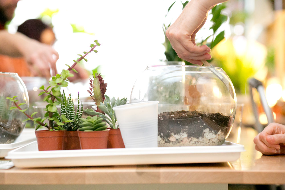 Did you know that 40% of the world's succulent plants occur in South Africa?  (source:   A Guide to Succulents of Southern Africa  ). Come get your hands dirty with some South African succies at our DIY Terrarium Bar or sign up for one of our  workshops .