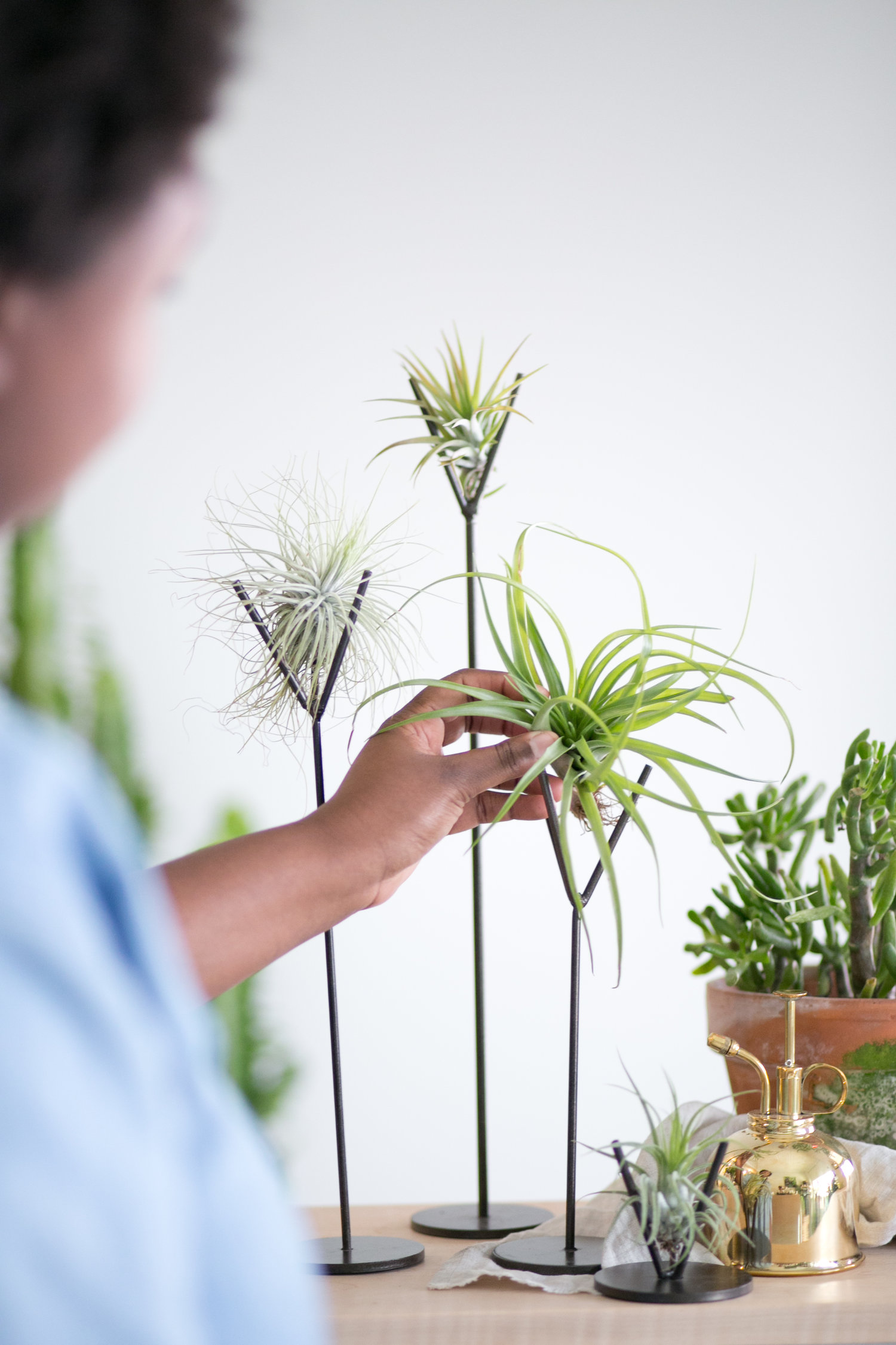 Steel Brown Air Plant Stands (Various Sizes & Sets) — The Zen Succulent    Durham's Neighborhood Plant & Gift Shop