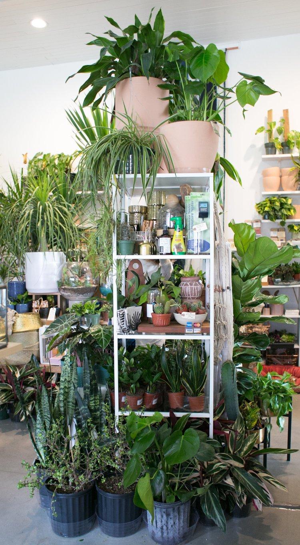 fertilizer what s the deal the zen succulent durham s