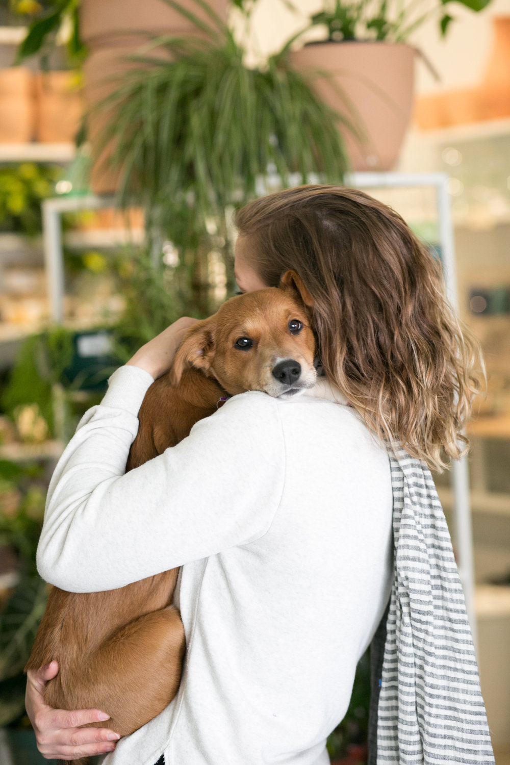 Keep your fur children safe with our top picks for pet friendly plants.