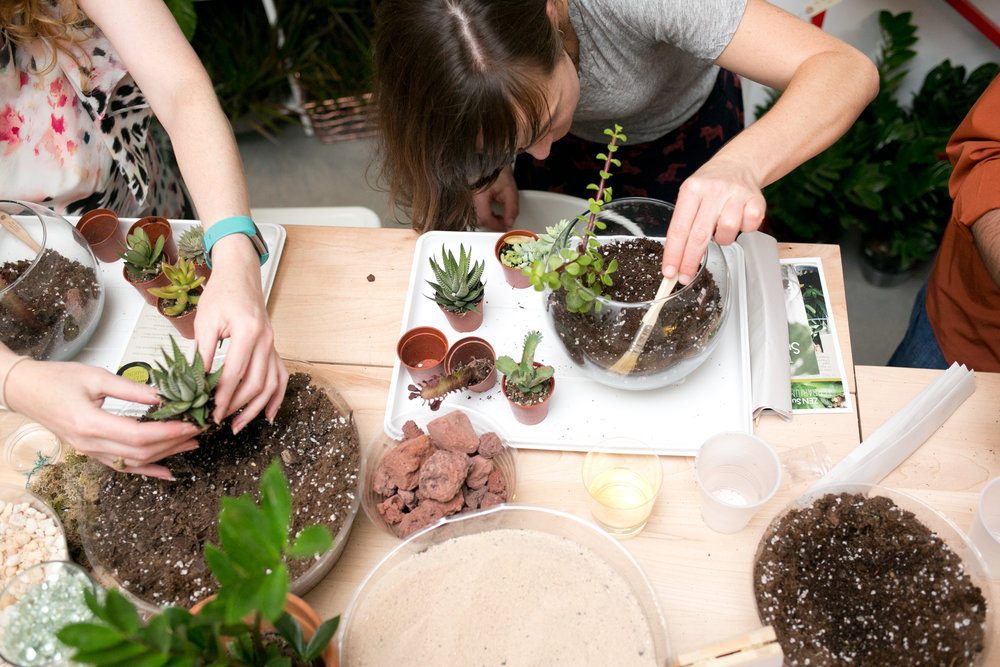 Stop by the shop and try our  DIY terrarium bar  or  sign up for a workshop  to build your own succulent creation with the help of our team.