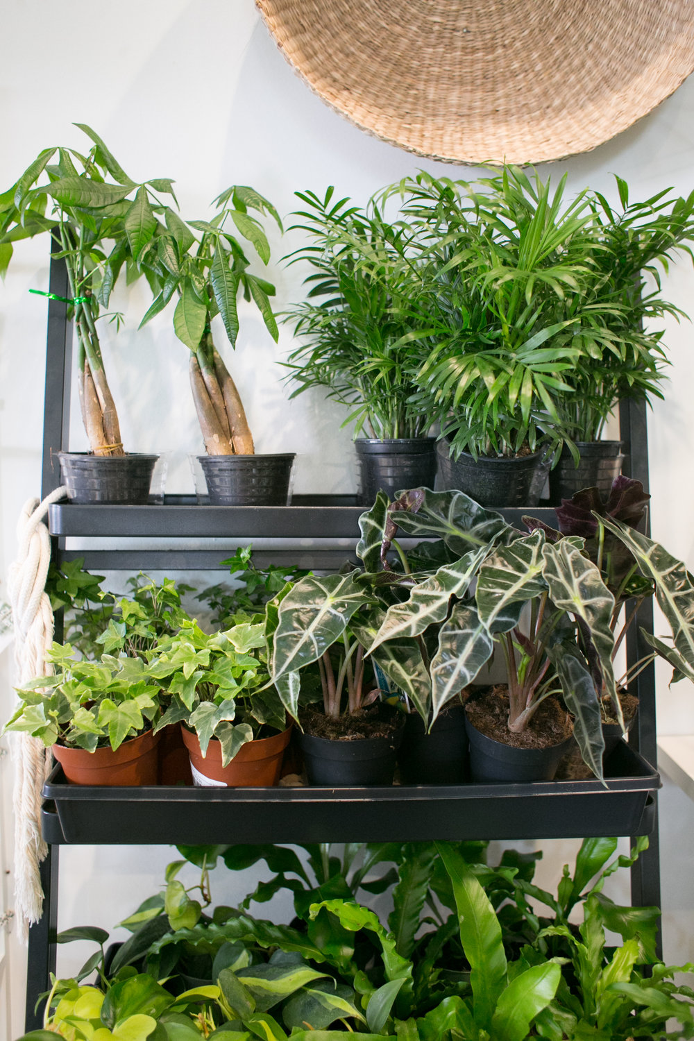 Grouping plants that require increased humidity actually helps create more humidity, which is preferable for most tropical plants.