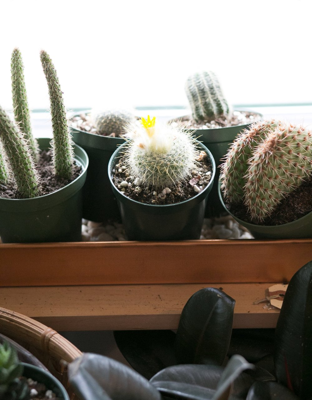 Cacti and succulents are the best plants to have if you travel frequently.  They need very little water and attention.