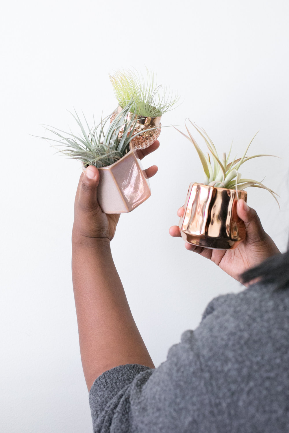 We have loads of fun accessories for air plants, such as stands, dishes and cups.  Stop by the store to pick some out.