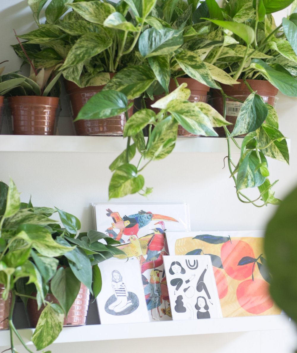 Pictured here, the Pothos 'Marble Queen' variety is beloved for its variegated leaves that vary in swirls of light yellow to white.