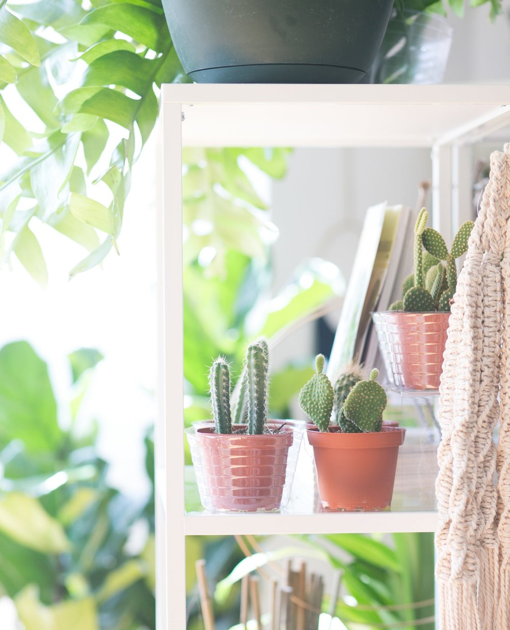 Cacti come from desert regions with little shade. In a home or office this translates to at least six (6) hours of light each day.