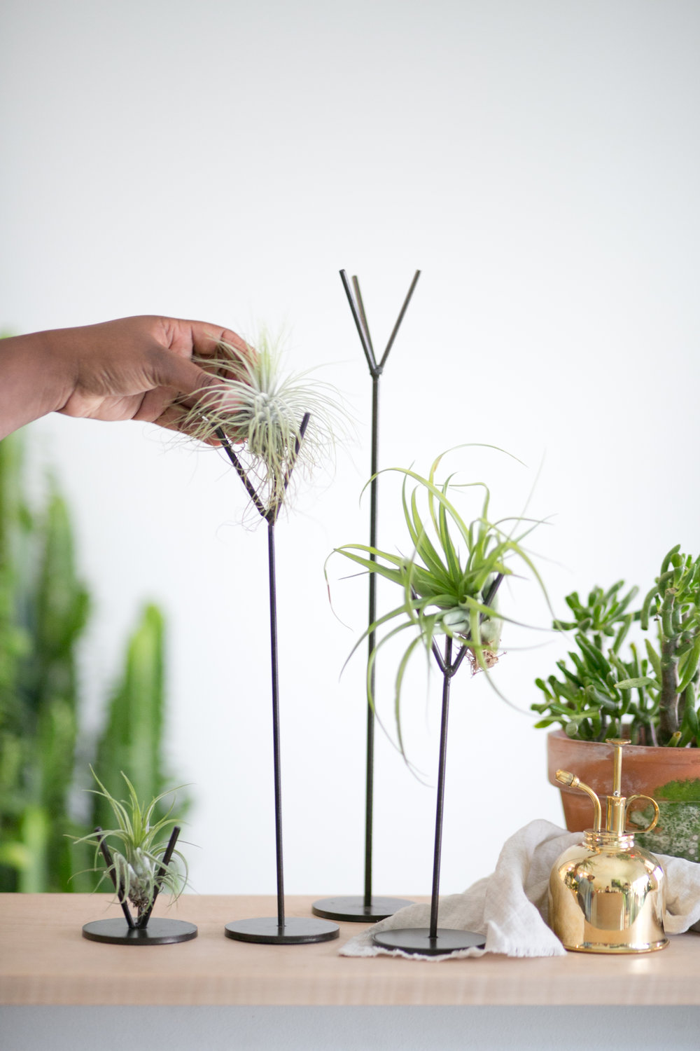 Air plants are great for fall and winter because they do not require a lot of natural light. You can also get really creative with how to display them!
