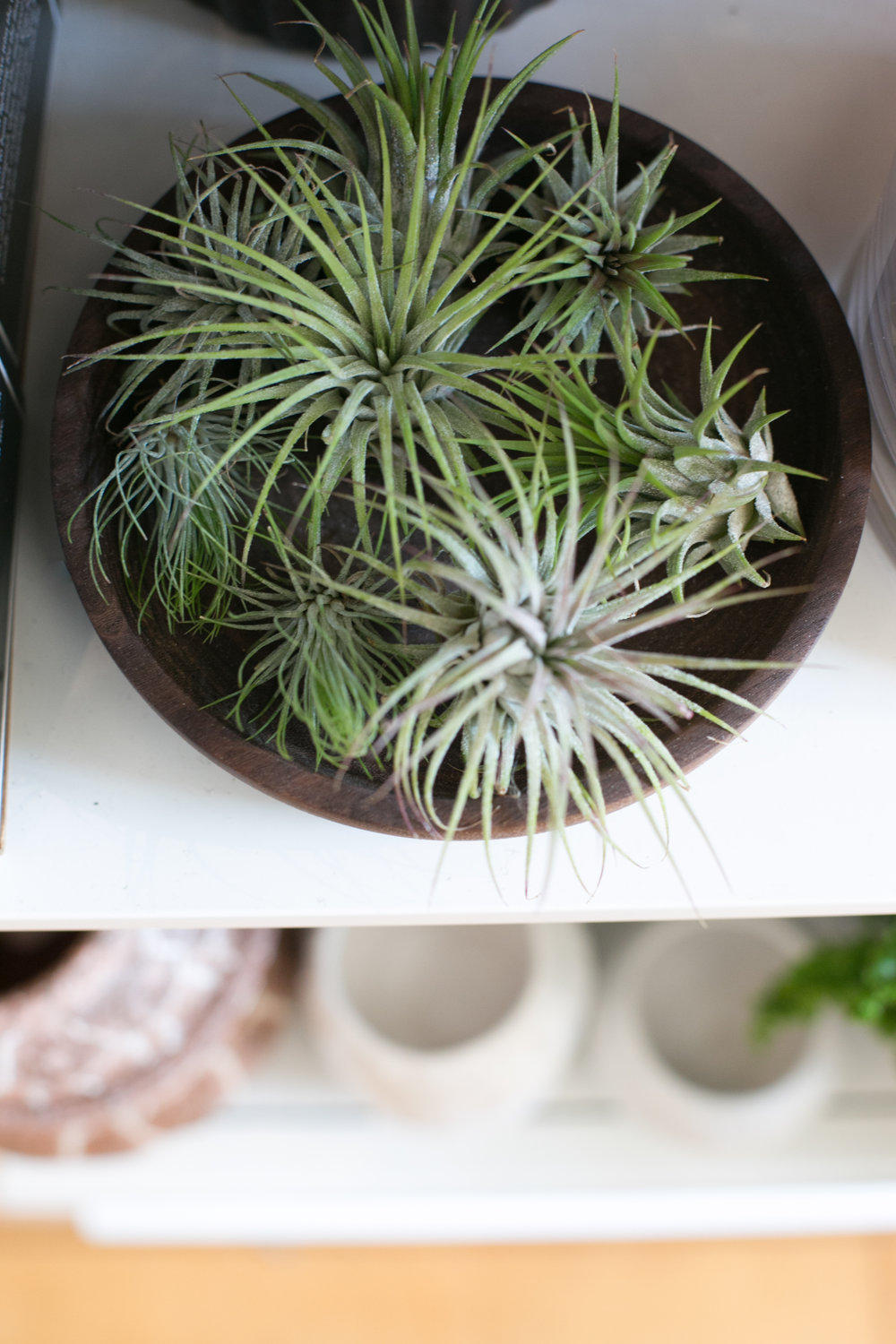 We carry a variety of air plants in various sizes, as well as fun vessels to display them with.