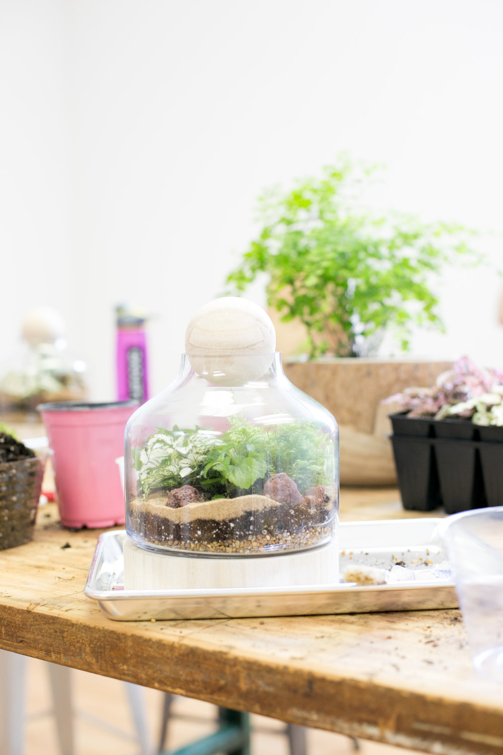 Terrariums with a closed top are ideal for creating a humid environment for plants like ferns.