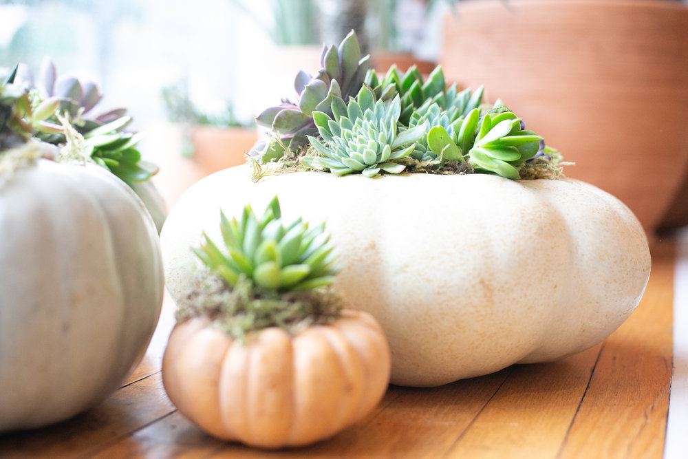"Succulents make a great centerpiece for any dinner party, especially these ""pump-u-lents"" in our Raleigh shop window."