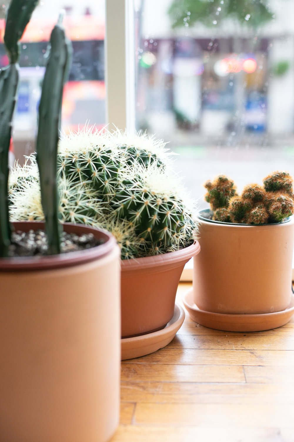 Most cactus species can go for months without watering in the winter.