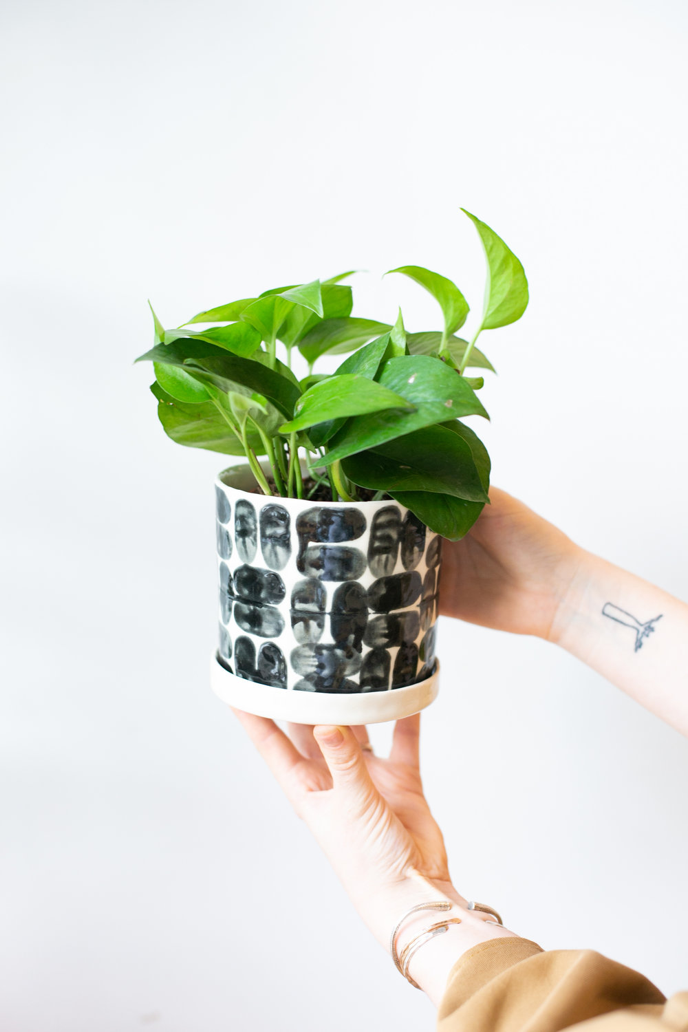 As it grows, pothos can trail or be trained to grow up a stake or pole.