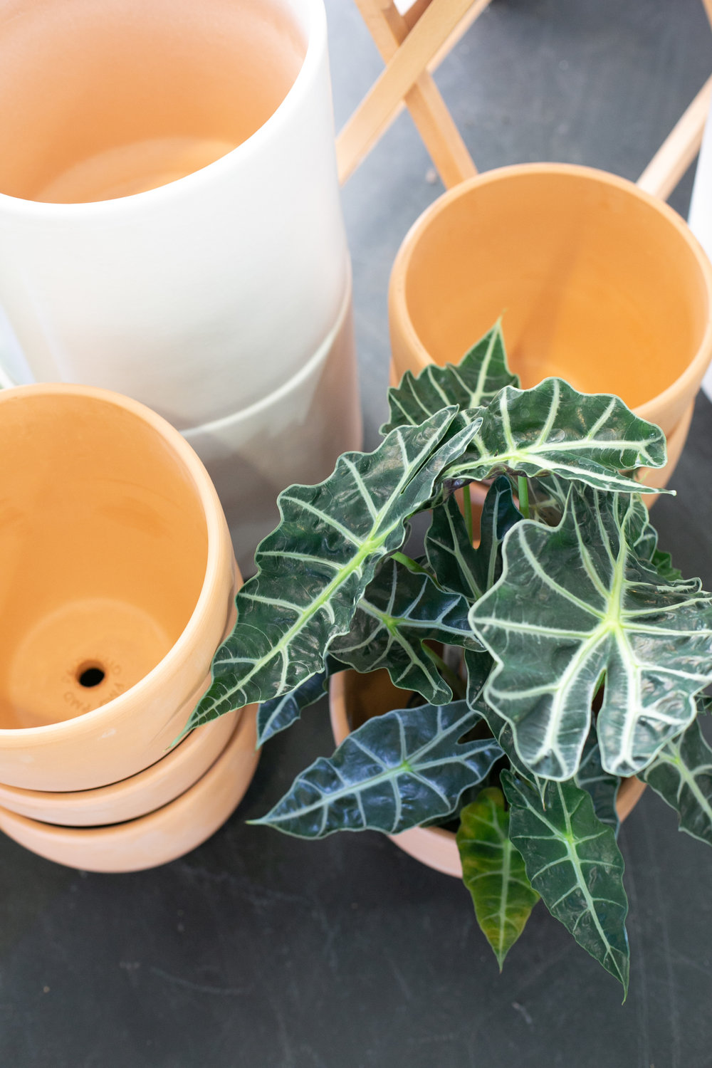 Not sure which pot the plant person your list might like? You can't go wrong with our signature terracotta collection.