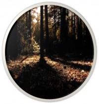 Woods3-e1427479553375.jpg