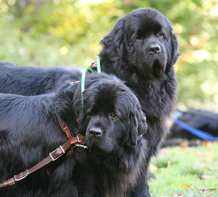 tubbys-dogs.jpg