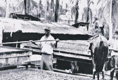 Secadores de Cacao   1980    CZ_001_002