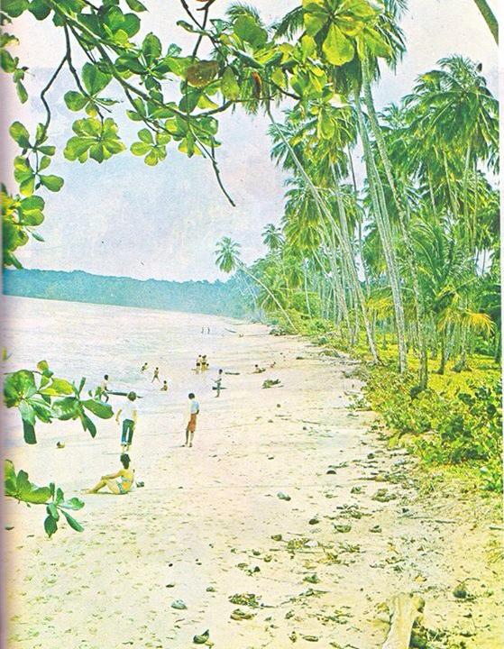 Cocotales de Cahuita   Cahuita   1977   Mira los cocotales bien cuidados    CZ_001_001