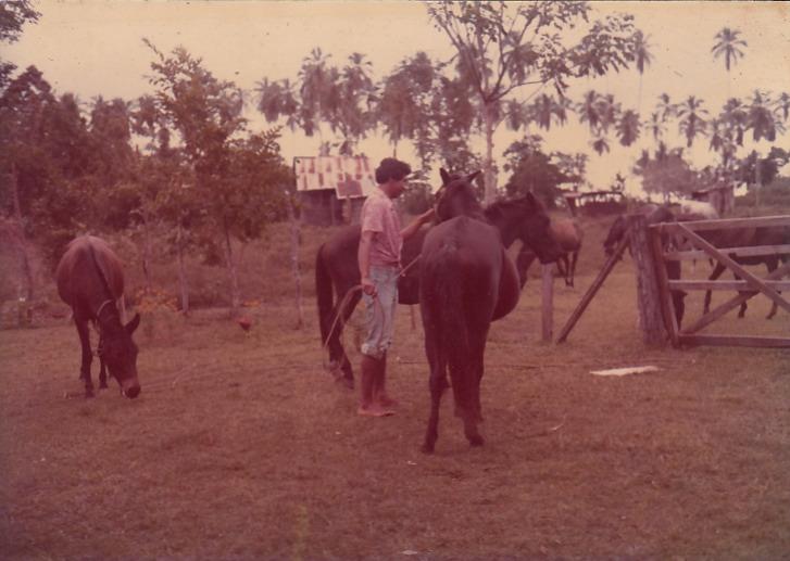 """Mis caballos    """"Playa Negra, donde potrero Rodman""""   1979   Siempre tuvimos caballos para el transporte de cacao    Colaborador: Mauricio Salazar Salazar  CC_001_005"""